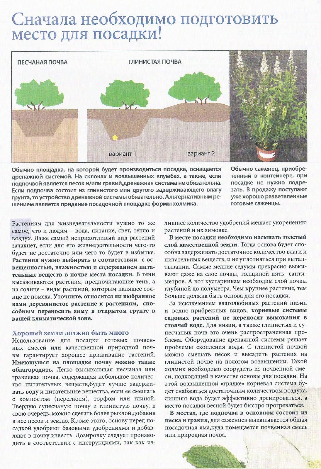 Особенности выращивания на песчаной почве 29